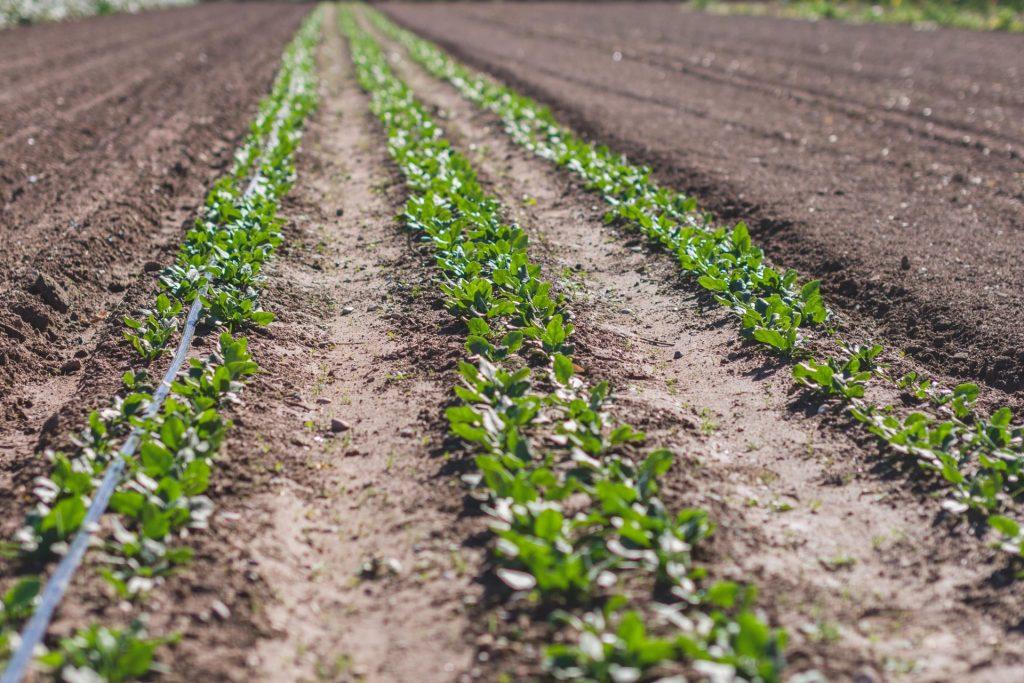 Agricultors ecològics de proximitat